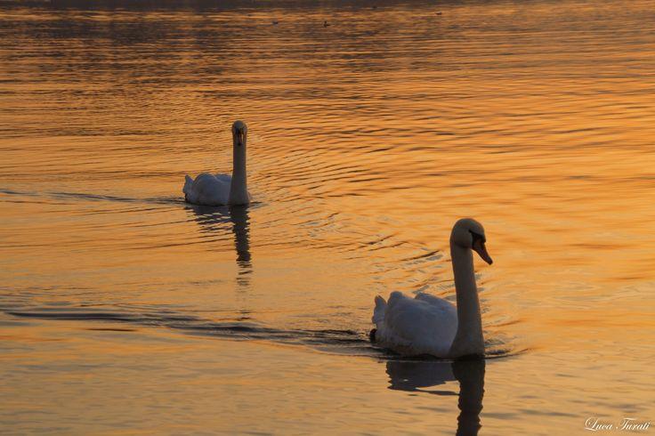 Il lago dei cigni by Luca Turati on 500px