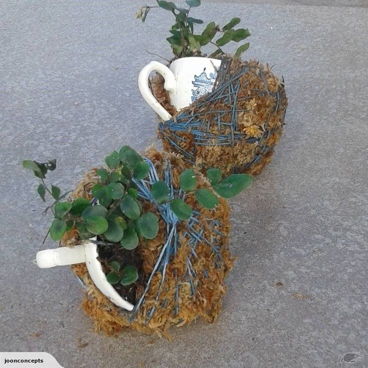 Kokedama - Kokerelic with fern and 'blue-willow' | Trade Me