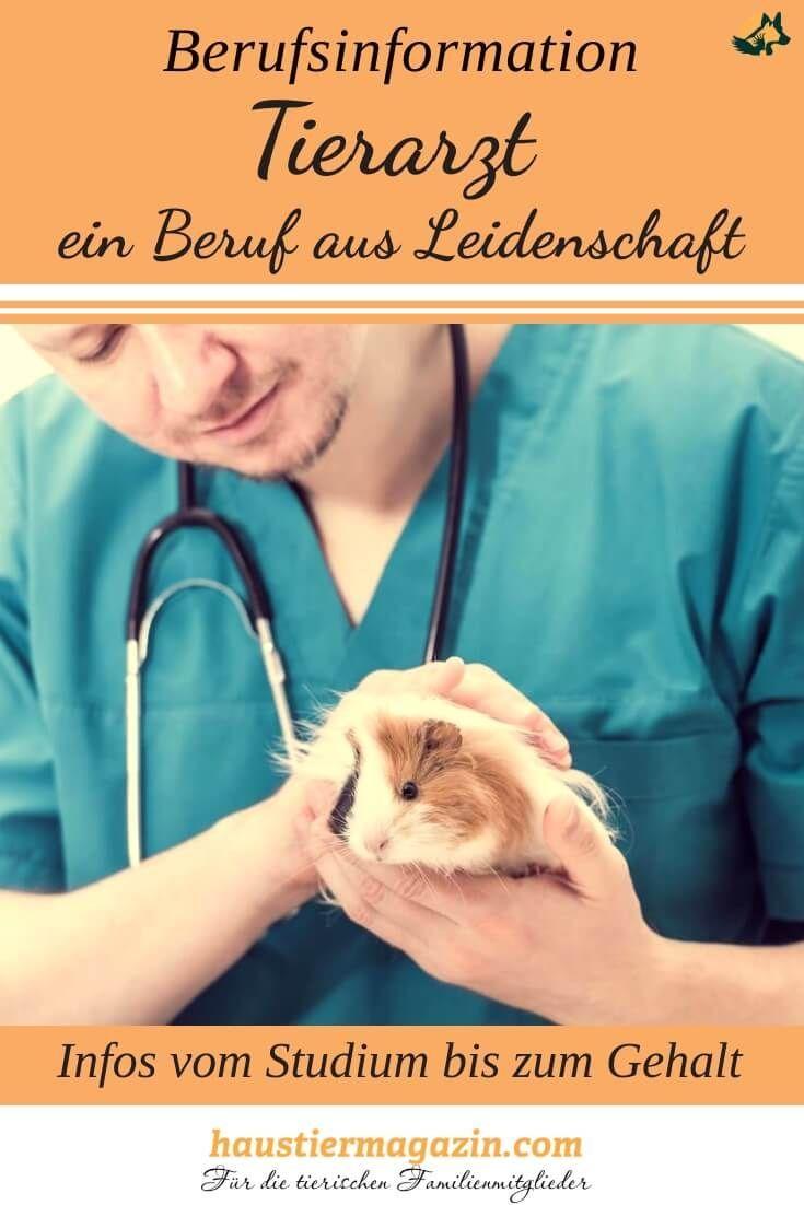 Tierarzt Ein Beruf Mit Vielen Verschiedenen Einsatzmoglichkeiten Berufe Mit Tieren Tierarzt Und Tierklinik