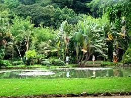Jardim Botânico - RJ - Lago Vitoria Regia