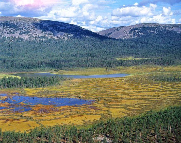 national park. Pyhä-Luoston kansallispuisto - Metsähallitus