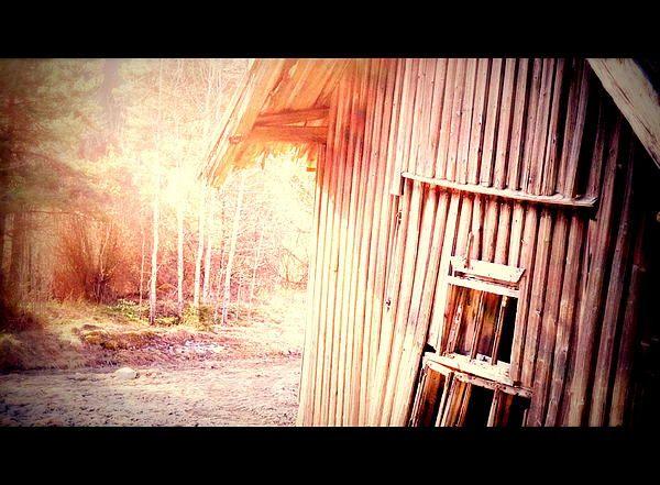 Morning At The Farm