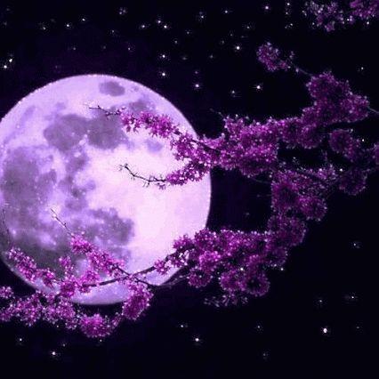 Post #: Boa Noite amigos ! O segredo de acordar sorrindo consiste na alegria de…