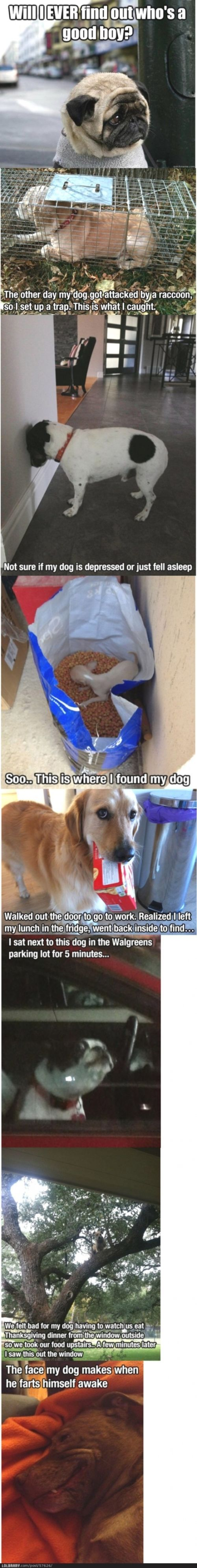 If you see a dog with it's head against the wall like the third picture TELL A VET it's serious! That one isn't funny...