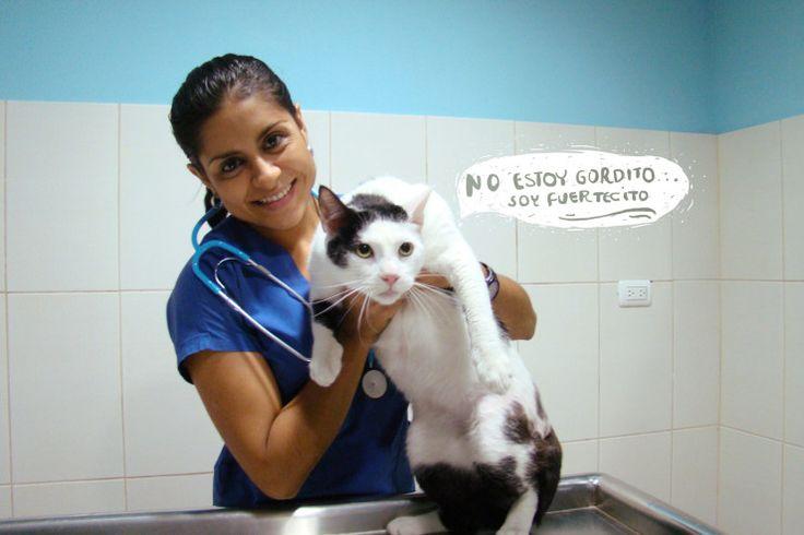 Gatos obesos: ¿Cómo evitarlo? :: #Positiva #Alimentación #Esterilización #PocaActividadFísica #Gatos #Cats #Pet #Health
