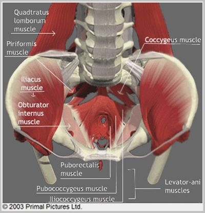 The Levator Ani muscle can have a profound effect on the local area if it becomes imbalanced. It's suspended like a hammock from the fascia of another muscle: the Obturator Internus. Therefore one way to help find balance is to assess for a tightened and restricted obturator internus. This can be accessed at the base of the thigh, and once you have found it, you can slowly sink into the deeper layers of pelvic floor muscles.