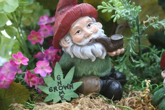 Garden Gnome Pipe Smoking Yard Gnome With Gnome Grown Leaf Sign