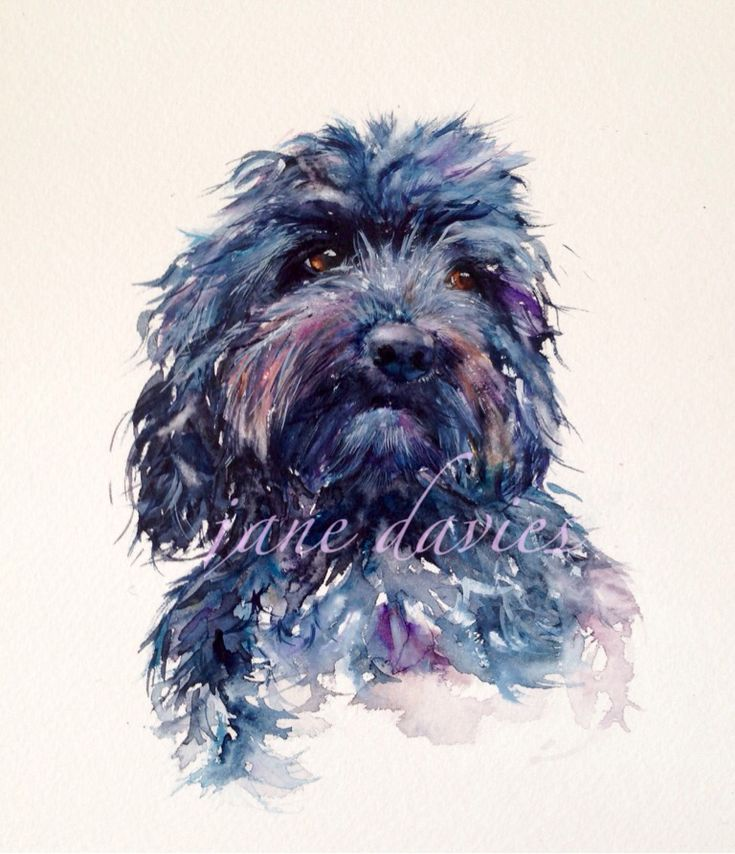 Pet portrait of a Poodle painted in watercolour by artist jane davies