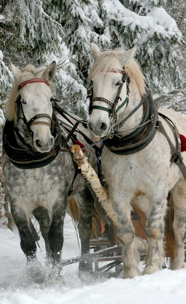 #draft #horses in #winter
