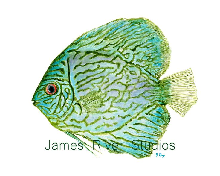 Tropical Fish Art Fish Painting Fish Print. by JamesRiverStudios