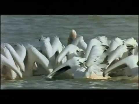 ▶ Ptačí svět - Le Peuple Migrateur - Winged Migration - YouTube (the entire hour and a half movie)