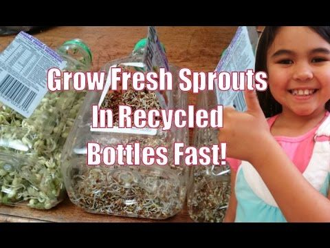 Grow Sprouts in Recycled Containers at Home Fast - YouTube