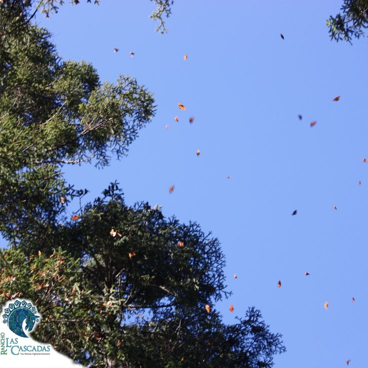 Breath taking views of the butterflies... Make this a must see for your next visit to the rancho.