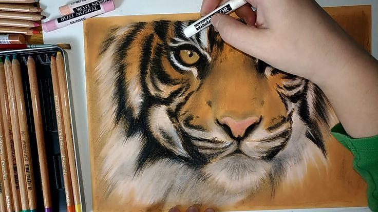 Tiger timelapse pastel drawing