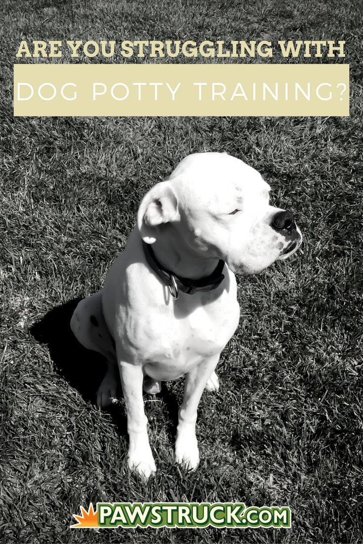 Best 25 potty training humor ideas only on pinterest for Dog potty training problems
