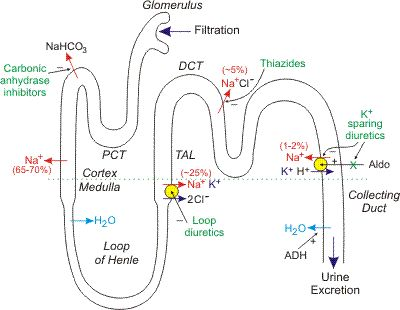 diuretics-- where was this when I was in school!