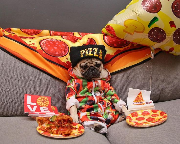 "Doug The Pug on Instagram: """"I bet u wouldn't have cancelled our plans if I told u it was a pizza party"" -Doug"""