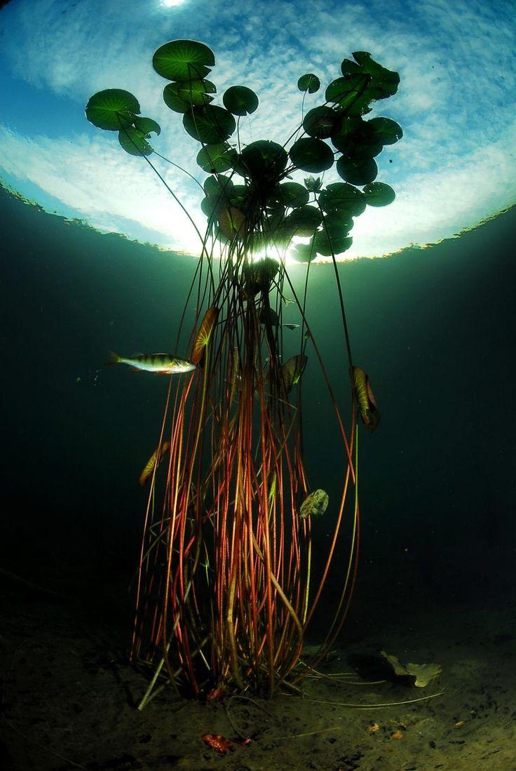 how long to bottom water plants reddit