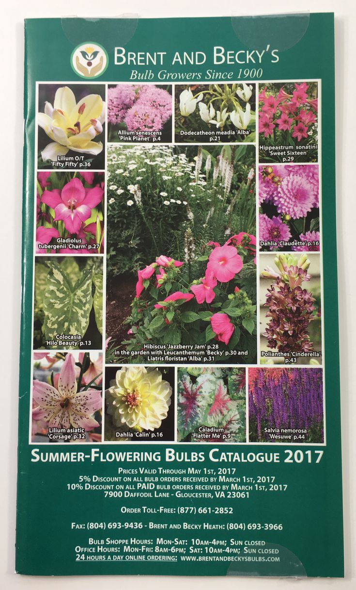 plants and flowers catalog - 735×1216