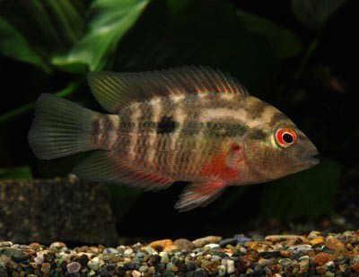 Las 25 mejores ideas sobre c clidos en pinterest for Tanques para peces