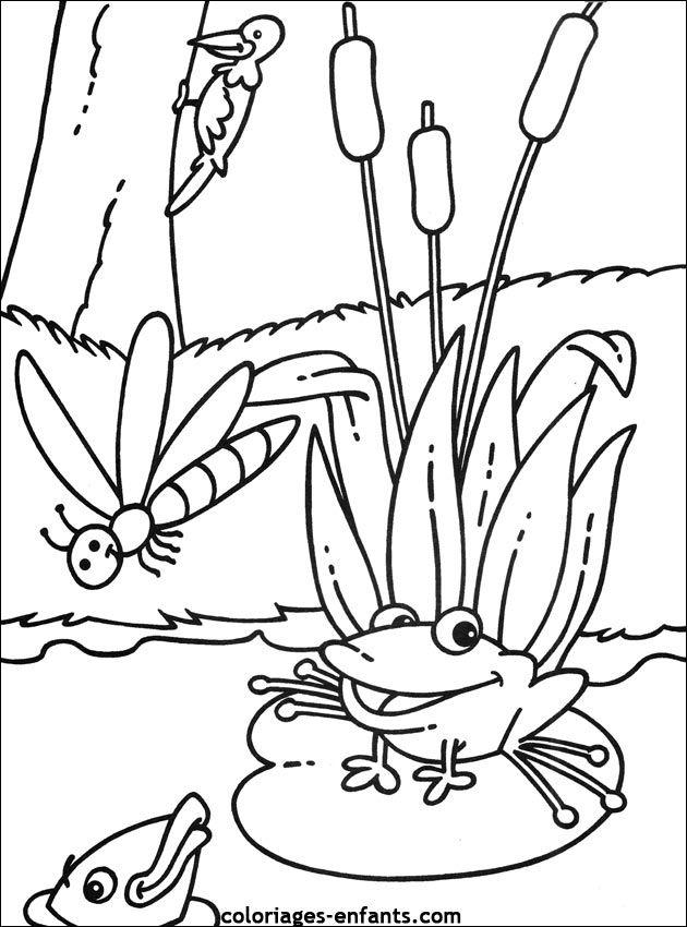 Coloriage Grenouille à colorier - Dessin à imprimer