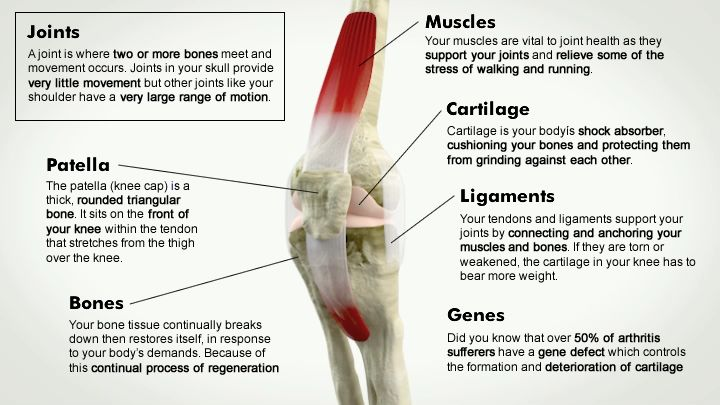 1000 Images About Physiotherapy On Pinterest Medicine Camps And Knee Pain