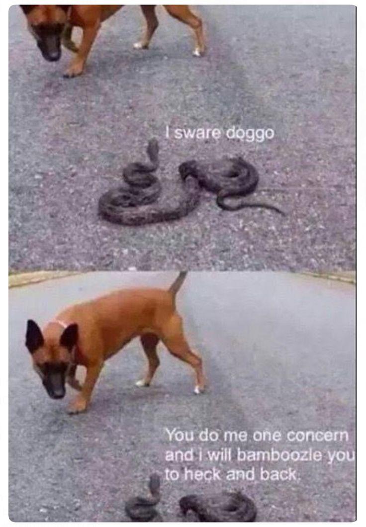 6e345a6e7a67fc994f496f33b41bd242 sweet memes so funny 99 best weird dog language meme i don't fully understand but still