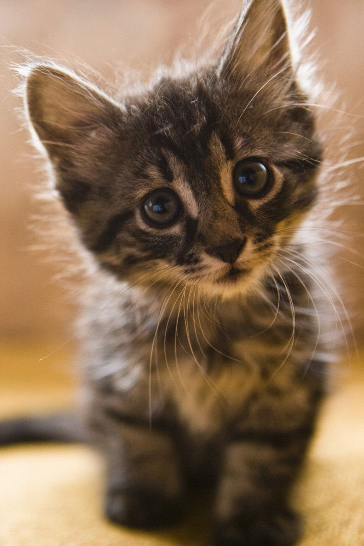 11 Reasons Your Crazy Cat Obsession Makes You Happier And ...