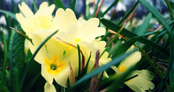 evening primrose oil for hair loss