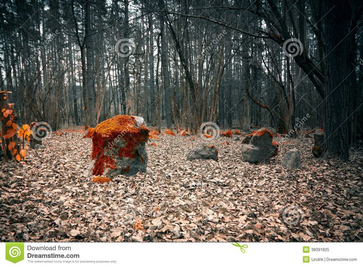 Mystical Cemetery In The Woods - Download From Over 46 Million High Quality…