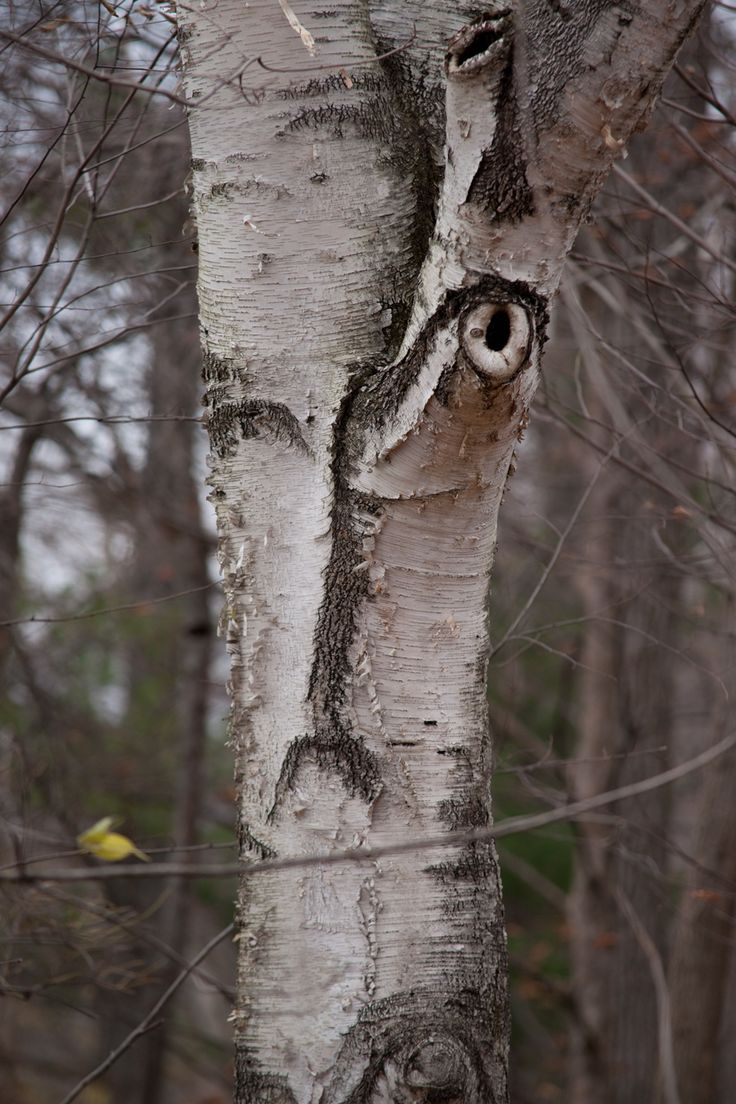 another tree with a face