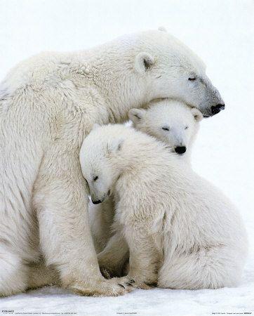 Polar family hug