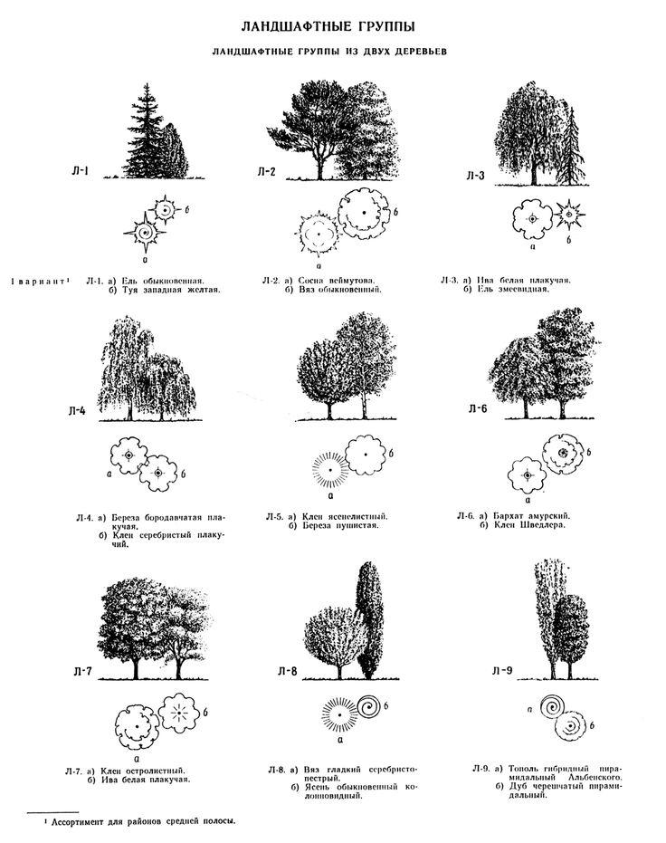 Композиции из растений | Tree and Shrub Placement