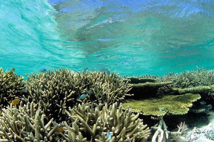 【沖縄おすすめ情報】 竹富北西(たけとみほくせい)/竹富島 浅瀬で見られるサンゴが見事。海の中はまぶしいほど明るい 撮影/瀬戸口 靖