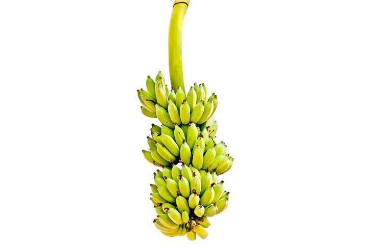 Bananenstaude-bananwn vor dem schlafen