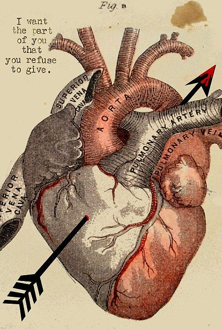 El #Corazón en los seres humanos representa, solo un pedazo de carne o el sentimiento mas intenso hacia otra persona #heart #cœur