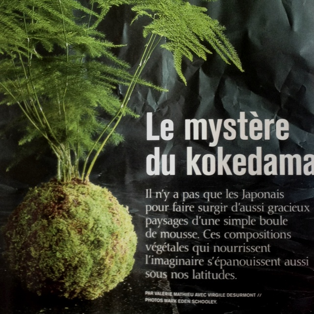 kokedama boule de terre avec plante au choix et recouvert de mousse chic shabby chic. Black Bedroom Furniture Sets. Home Design Ideas