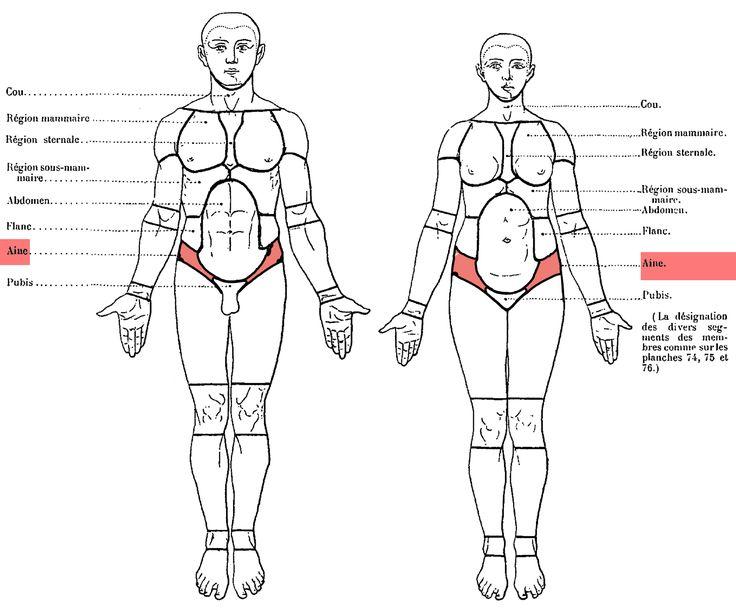 Zone du corps située à l'union de la cuisse(haut de la) et de l'abdomen(tronc, bas ventre). Du latin inguen, de inguinem. Appelé aussi :Inguen (PNA) Anglais :Groin Russe :Пах(pakh) Elle compr…