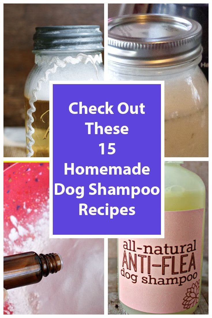 what is the best homemade flea shampoo