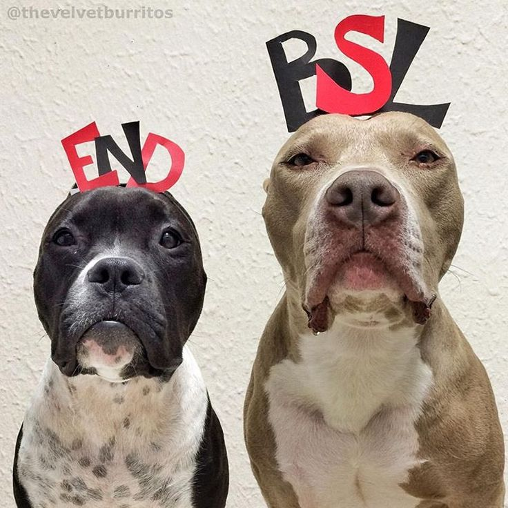 """""""END Breed Specific Legislation (BSL): """"Don't rely on breed stereotypes to keep yourself safe from dog bites. A dog's individual history and behavior are…"""""""