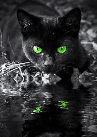 black cat reflection.