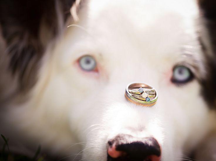 dog wedding portrait, detail wedding, photographe mariage