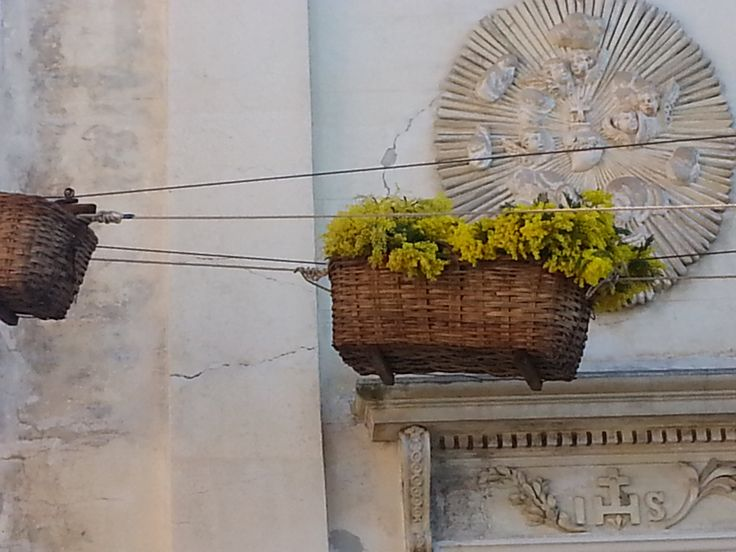 Mimosa Festival in the Italian Riviera: baskets full of Mimosa coming from the typical terraced gardens through a special cable car