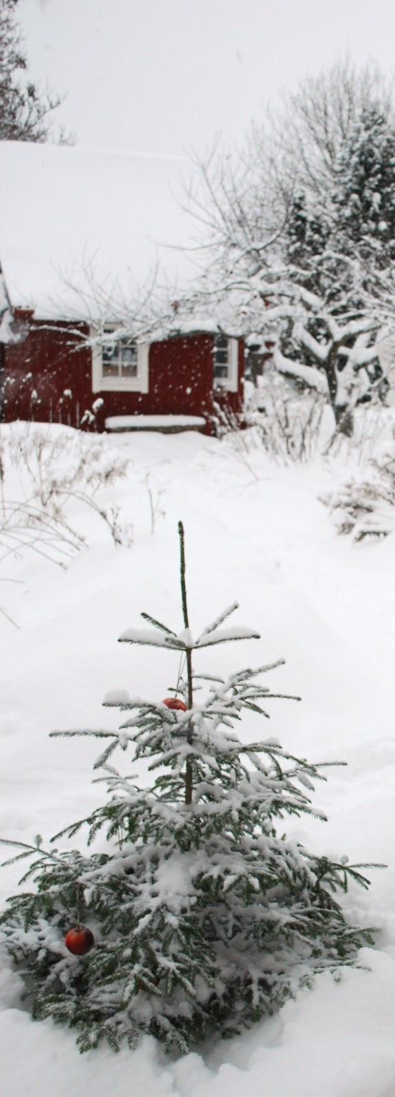 Winter on the farm.. :)Christmas Time, Winter Scene, Snow, Winter Wonderland, White Christmas, Country Christmas, Christmas Trees, Charlie Brown
