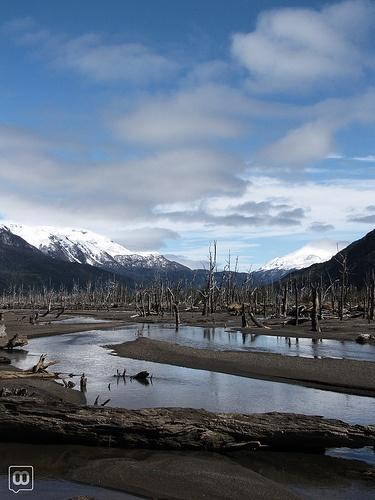 Bosque Muerto, Patagonia by WM ®, via Flickr