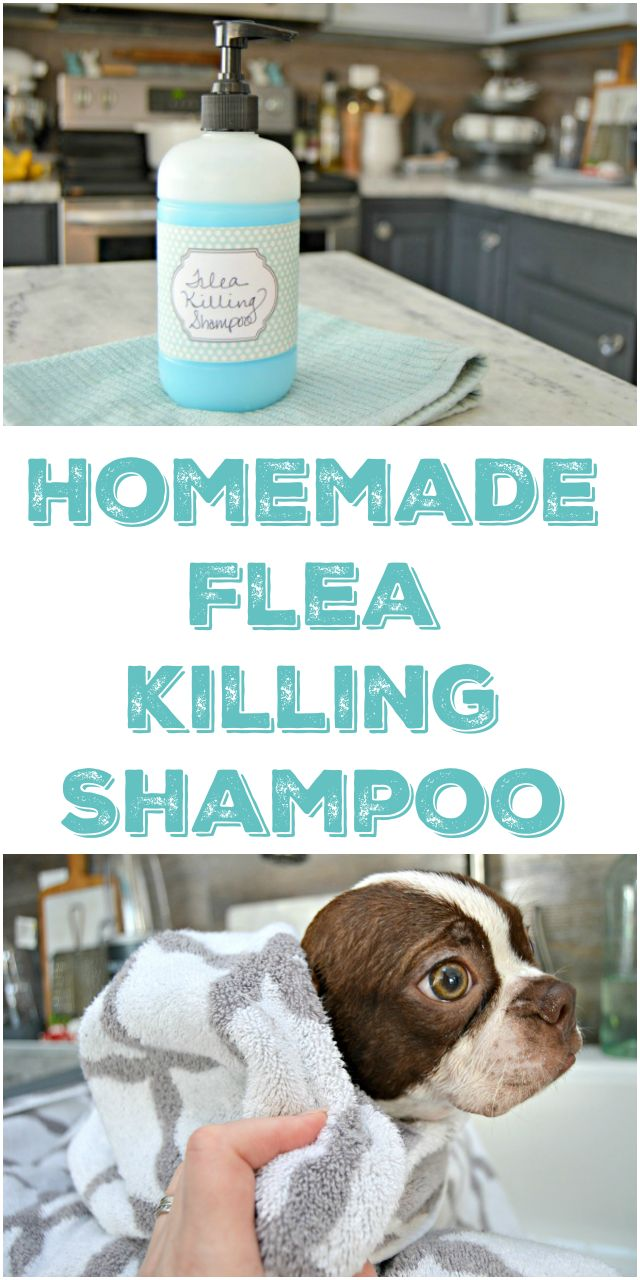 Homemade Pet Shampoo That Kills Fleas via @Mom4Real