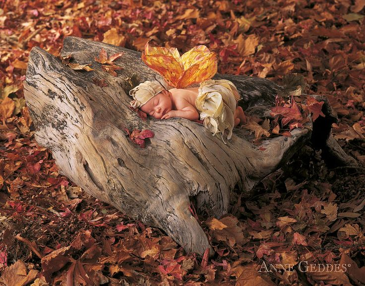 Woodland Fairy by Anne Geddes