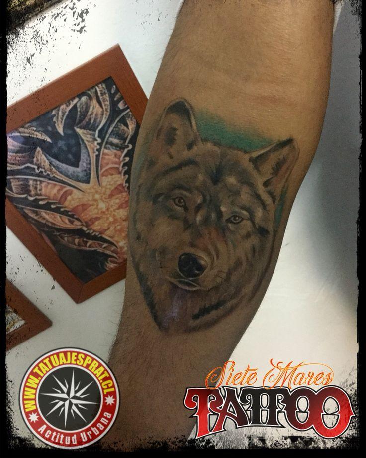 Cicatrizado By @tatuajesprat #chilemoda #tattooartist #tatuajesprat #eurocentro #portallyon #chiletattoo #wolf #sietemarestattoo camilo prat