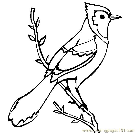 printable coloring pages of blue jays | Blue Jay printable coloring page for kids and adults ...
