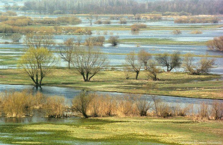 POLSKIE KRAJOBRAZY Wiosenne rozlewiska Narwii
